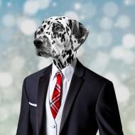 Segarty Dog Neck Ties, 30 PCS Dog Ties, Adjustable Dog Neckties for Medium Large Dog, Bulk Pet Bow Ties Collar Dog Grooming Accessories for Girl Boy Dogs Valentines Holiday Birthday Wedding Costumes